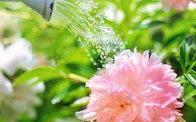 Entretenir son jardin durant les différentes saisons: il faut le faire
